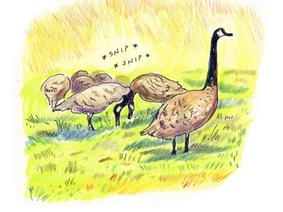 Canada Geese birds corey corcoran city outsiders outdoors illustration drawing geese
