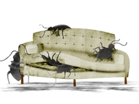 bed bugs take over the couch...