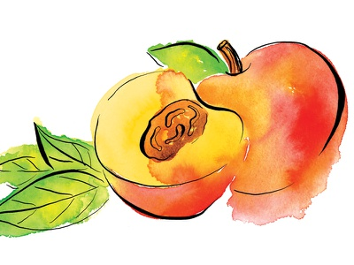 Peach pen leaves fruit ink peach painting paint colorful color watercolor
