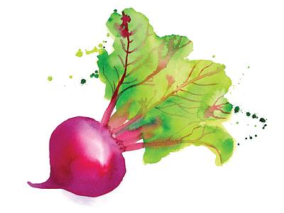 Watercolor Beet food watercolour beet dip cooking vegetable ingredients recipe illustration watercolor