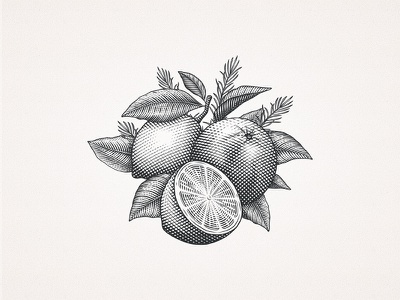 Citrus art leaves lemon orange citrus engraving crosshatching etching illustration drawing custom hand-drawn