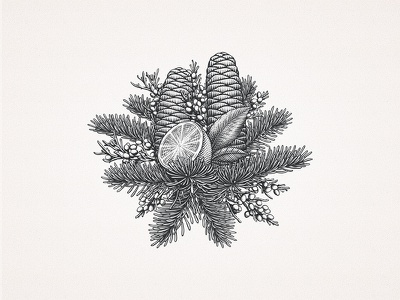 Silver Fir Cones and Citrus illustration drawing leaves etching engraving cones citrus custom hand-drawn