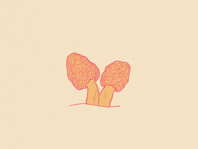 Morels texture mushroom illustration design