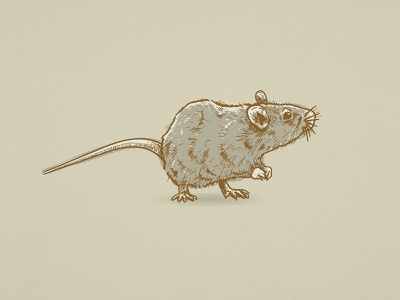 2020 | Year of the Rat animal illustration illustration digital illustration design illustration art rat illustration scratchboard etching design process adobe illustrator