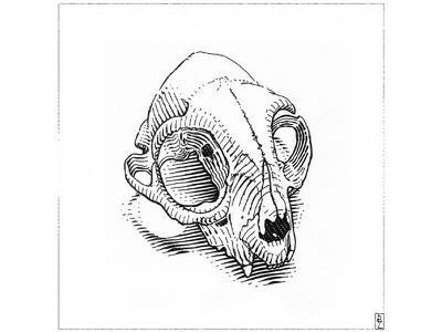 cat's skull graphic design illustration black and white woodcut engraving gravure etching editorial illustration book illustration skull cat