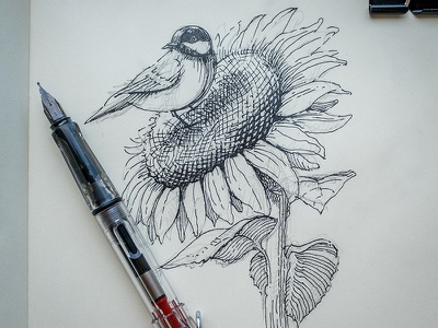 Quick sketch blackandwhite flower bird work in progress sketch illustration ink drawing etching hand drawn fountain pen sunflower tit