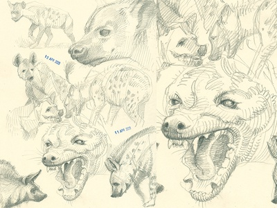study design hatching drawing etching sketching cross hatching pencil sketch pencil drawing hand drawn sketch animal animalillustration hyena