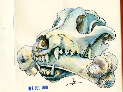 dog and bone art traditional urban sketching sketching daily practice skullyjuly7 skullyjuly ink and watercolor hand drawn sketchbook sketch dog illustration watercolour warercolor skull bone dog