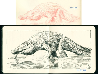 Croco redpencil-n-ink study [inktober 2020] sketchbook traditional art sketch gravure hatching engraving drawing graphic ink illustration crosshatching etching ink drawing alligator crocodile