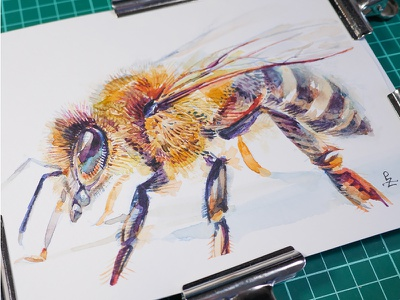 Africanized honey bee 🐝 [watercolor] animalillustration sketch webdesign packaging insect traditional art painting watercolour watercolor bee editorial illustration book illustration honey bee drawing illustration