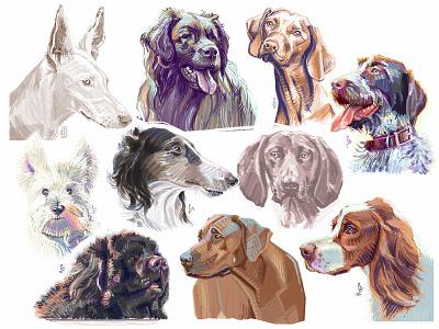 Good boys [digital sketch] drawing concept art art good boy best friend digital art photoshop painting character design editorial puppy hound dog sketch illustration