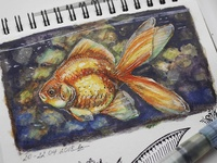 Golden fish, sketch from life