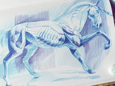 Écorché of the unicorn sketch unicorn horse ballpoint pen bic4 doodle