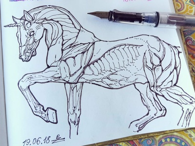 fun with fountain pen crosshatching woodcut engraving fountain pen sketch unicorn horse fine liner doodle