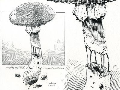 Amonita ink drawing inktober gravure hatching editorial engraving sketch drawing etching woodcut graphic ink illustration
