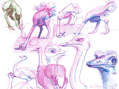 working sketches sketching sketch illustration drawing character design ostrich