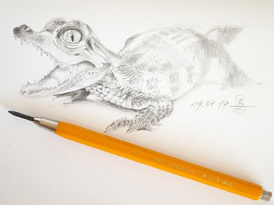 Young caiman study hatching character design illustration conceptart characterdesign gamedev traditional art pencil drawing drawing sketching sketch caiman crocodile