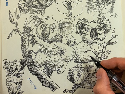 doodling koalas engrave ink crosshatch sketching character design fountain pen ink drawing sketch koala cute adorable character doodle
