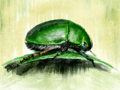 Beetle bug plant insect turpentine daily art procreate art procreate