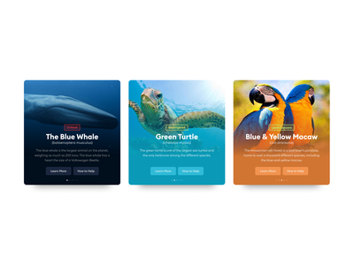 Endangered Species endangered animals application redesign branding app ux design ui