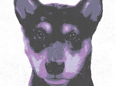 Hudson dog illustration shiba inu drawing