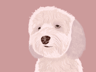 Kinnley the fluffy dog print pink portrait illustration procreate dog