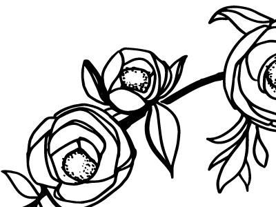 camellia flower drawing