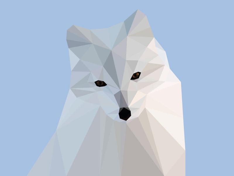 Arctic Polyfox fox poly