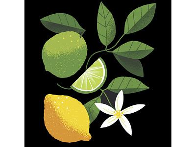 Citrus fruits contrast candy jam tea product illustration package illustration citrus fruits illustration