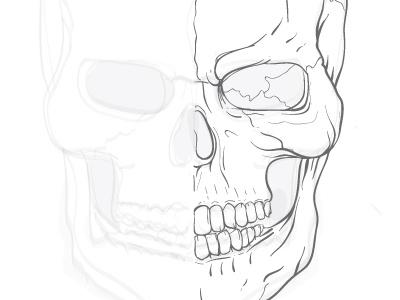 Skull Practice Sketch vector skull wip