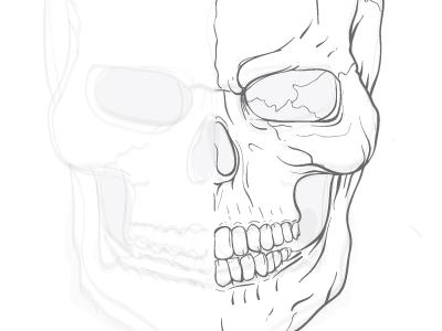 Skull Practice Sketch
