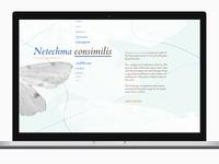 Netechma design timebox