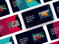 Wildlife Shots Website visual design animation app photography wildlife website webdesign web ux design user interface user experience ui design typography design colors