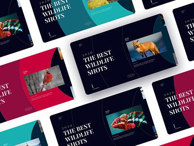 Wildlife Shot Animation typography clean photography userinterface website uiux web app visual design minimal uxdesign uidesign animation ux ui colors wildlife