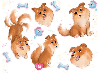 Sheltie Molly, not collie sheepdog collies little dog doggy puppie dog sheltie molly
