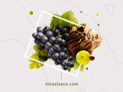 Composition for the official Alsace Wines website wine graphic design webdesign