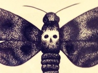 Death's-Head Moth
