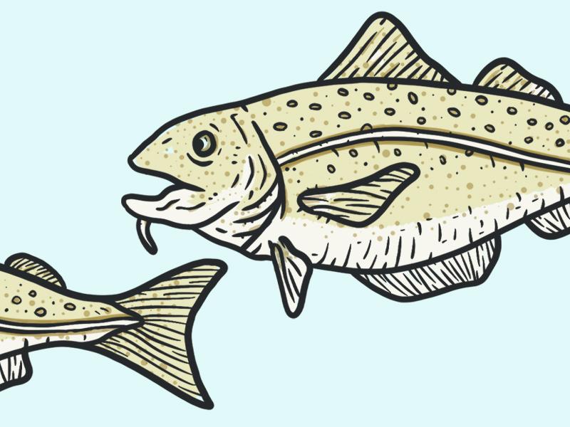 Cod Fish blue under the sea illustration fish cod