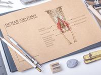 Human Anatomy Digital Illustration