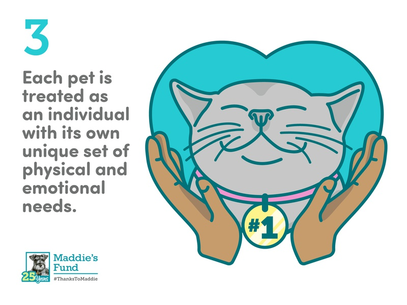 Maddie's Fund - 3rd Guiding Principle for Foster Programs gray cat 1 pet emotional unique foster care love heart cat icons rescue shelter animal illustration infographic