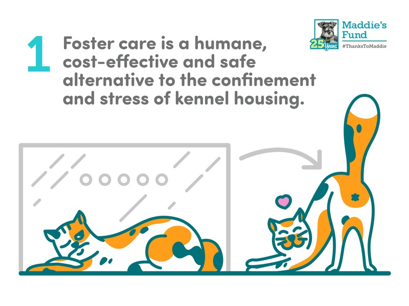 Maddie's Fund - 1st Guiding Principle for Foster Programs stress kennel confinement humane butt happy sad cage outside love calico cat foster care icons rescue shelter animal illustration infographic