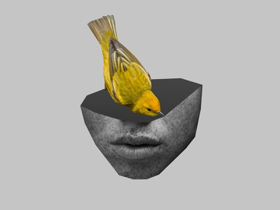 canary bird blackandwhite canary art direction portrait face illustration design collage art collage artwork art