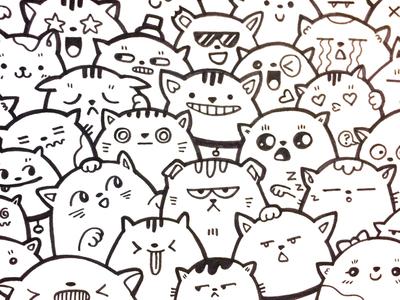 Choose Your Cat cat