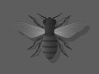 Bee Concept 2 Further
