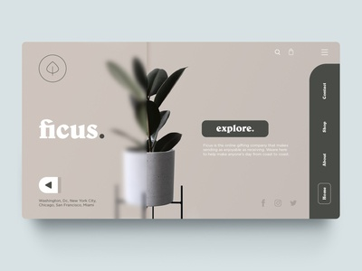 Ficus - Plant shop