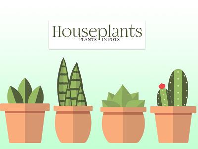 House plants adobe illustrator cc plants in pots potted plant cactus succulents adobe illustrator vector design illustration