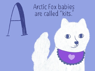 Arctic Fox arctic fox baby animals