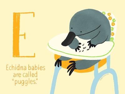 echidna cute animal echidna educational cute baby animals childrens book illustration childrens books childrens book cute illustration cute animals
