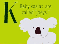 Koala digitalart illustration koala cute illustration childrens illustration childrens book baby animals