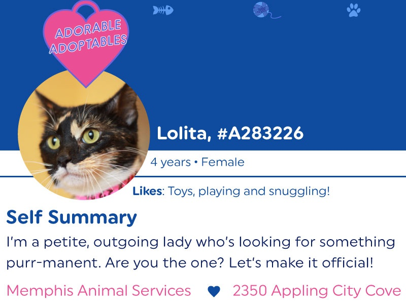 cat lady dating profile